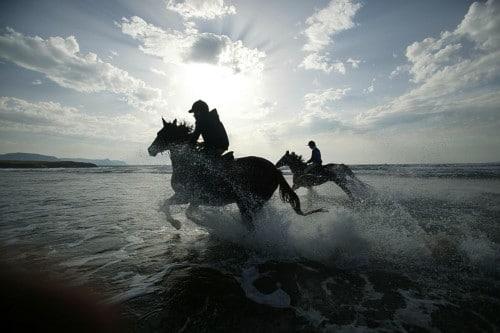 DELS sunset horses