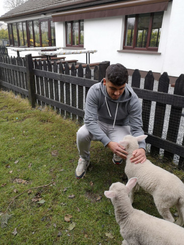 Work experience on a farm for animal lovers
